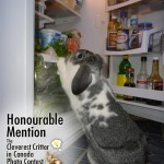 Honorable Mention - Hopscotch &amp; Rachel (Large)